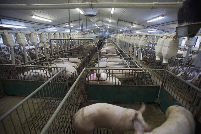 养殖智能生物安全管控系统解决方案