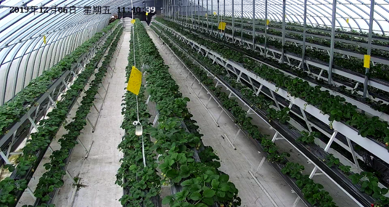 农业智能大棚监控应用