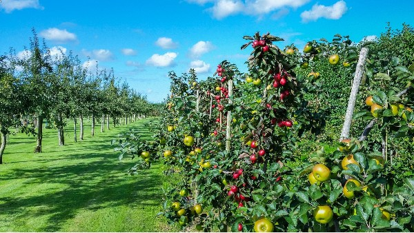 果园综合安防方案