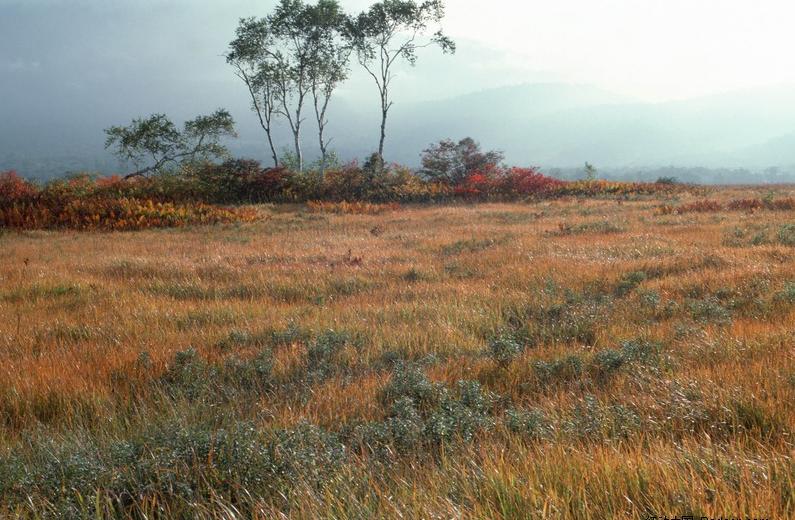 林草智能可视化防火系统解决方案
