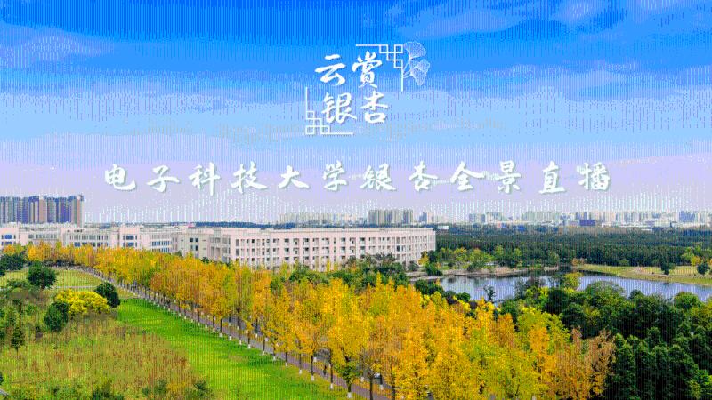 电子科大银杏全景直播